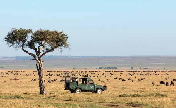 fotosafari safari fotografici