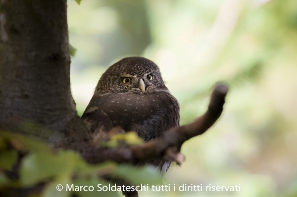 fotografo Marco Soldateschi