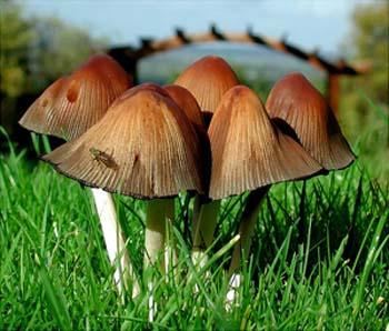 Fotografare i funghi