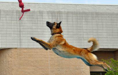 Come fotografare i cani