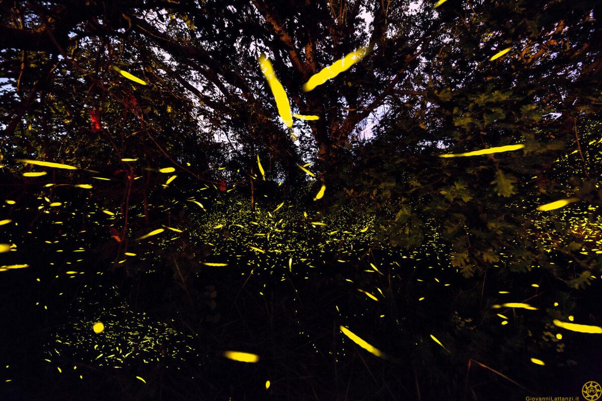 Come fotografare le lucciole