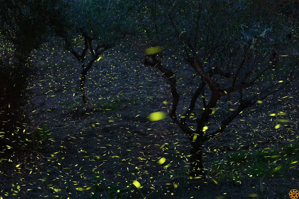 fotografare le lucciole